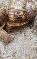 Snails vs Humans by FozzieJ