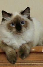 Aku Seekor Kucing (Hold) by ayinn_syuhada