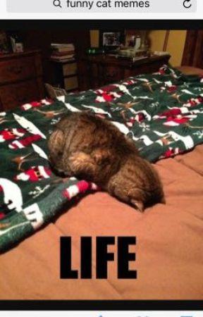 Funny Cute Cat Memes What Did U Do Wattpad