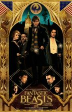 Fantastic Beasts and Where to Find Them (Newt Scamander x Female!Reader) by LayceJ25