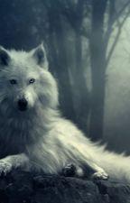 White Wolf-BuckyXOC by The-Writer_13