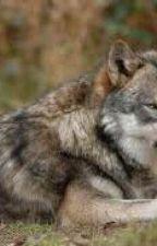 Vlk Samotář by LukekChoutka