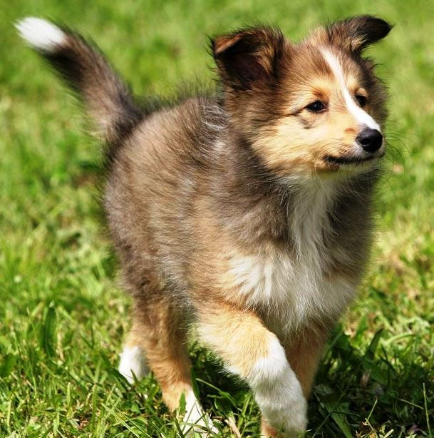 BackStory• He grew up on his own not knowing who his parents were he started skinwalking at the age of 4 changing form of a Shetland Sheepdog