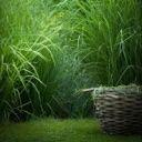 1-800-TOUCH-GRASS