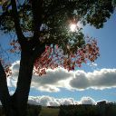 Ash_Vermont