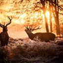 Deer-Aki