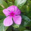 FloraTheWriter