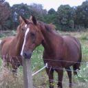 General_Joe_My_Horse