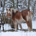 Mustangowa