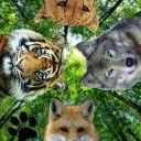 Nature_Adventures