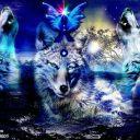 Queenie_Wolf