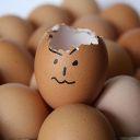 RebButterfly