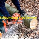 SchaumburgTree
