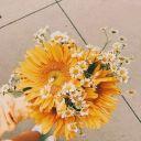 Sunflowii_