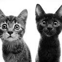 TheFoxGirl12