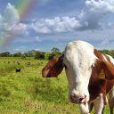 TheProjectParty