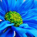The_Nezuko