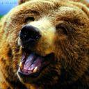 Uninspired_Bear