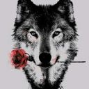 WolfLover4052
