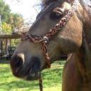 _HorseRider_