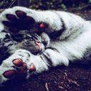 _tigres