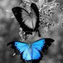affharry_loves1D