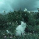 bluecatychi