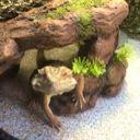 chameleonsrule