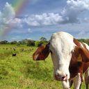 cherryfilings