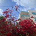 fatimata_laab