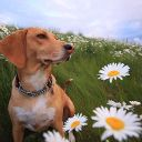 lifeisadog