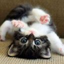 storyfa_