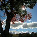 topwinggirlfan208