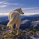 wolfxxgirl
